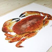 Red Rock Crab Print | Martyn Warren | Cancer Productus